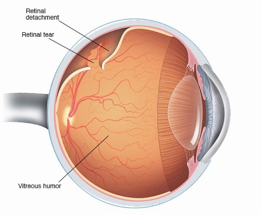 Illustration of a human eye anatomy